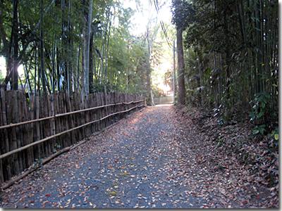 竹垣と竹林